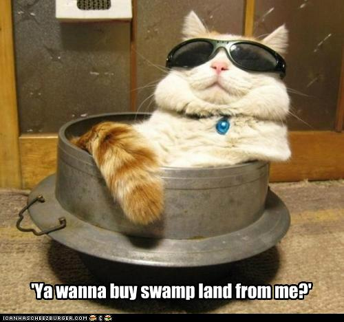'Ya wanna buy swamp land from me?'